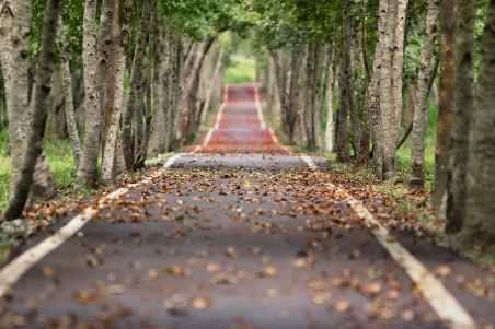 woodland-road-falling-leaf-natural-38537.jpeg